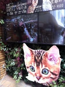 新京極にあった京都ひょう猫の森の看板