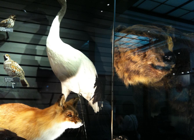 上野博物館クマの展示物画像