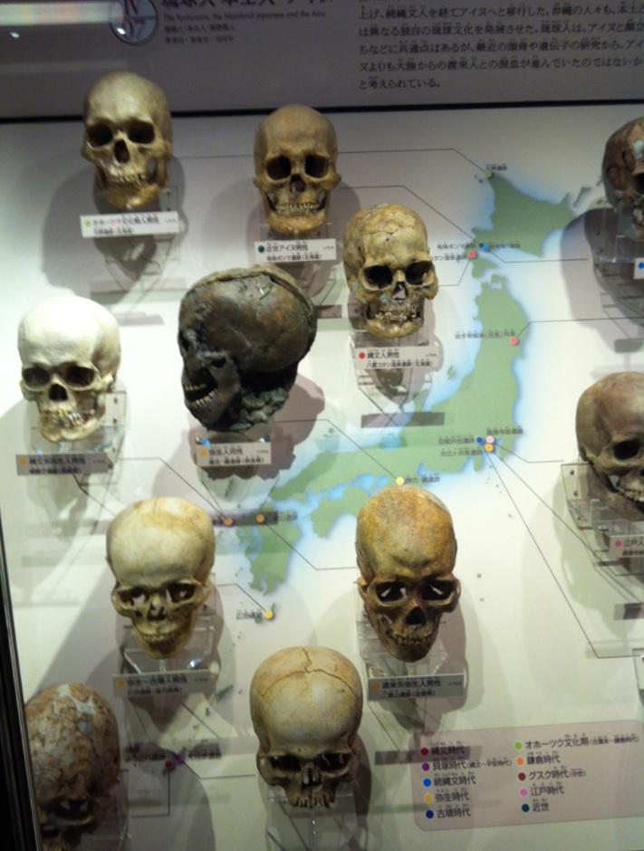 上野博物館の展示物~どくろの画像