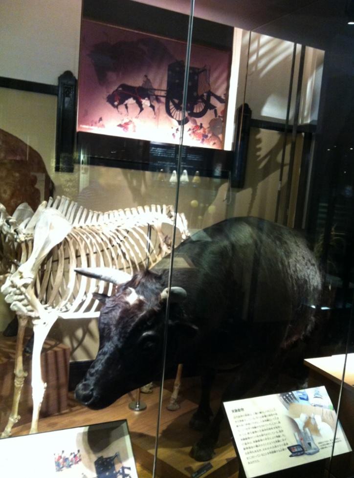 国立科学博物館の牛の展示物画像
