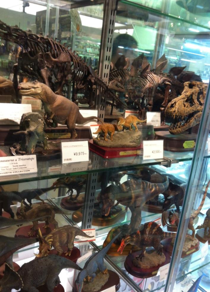 国立科学博物館のお土産屋さん~恐竜の化石の画像