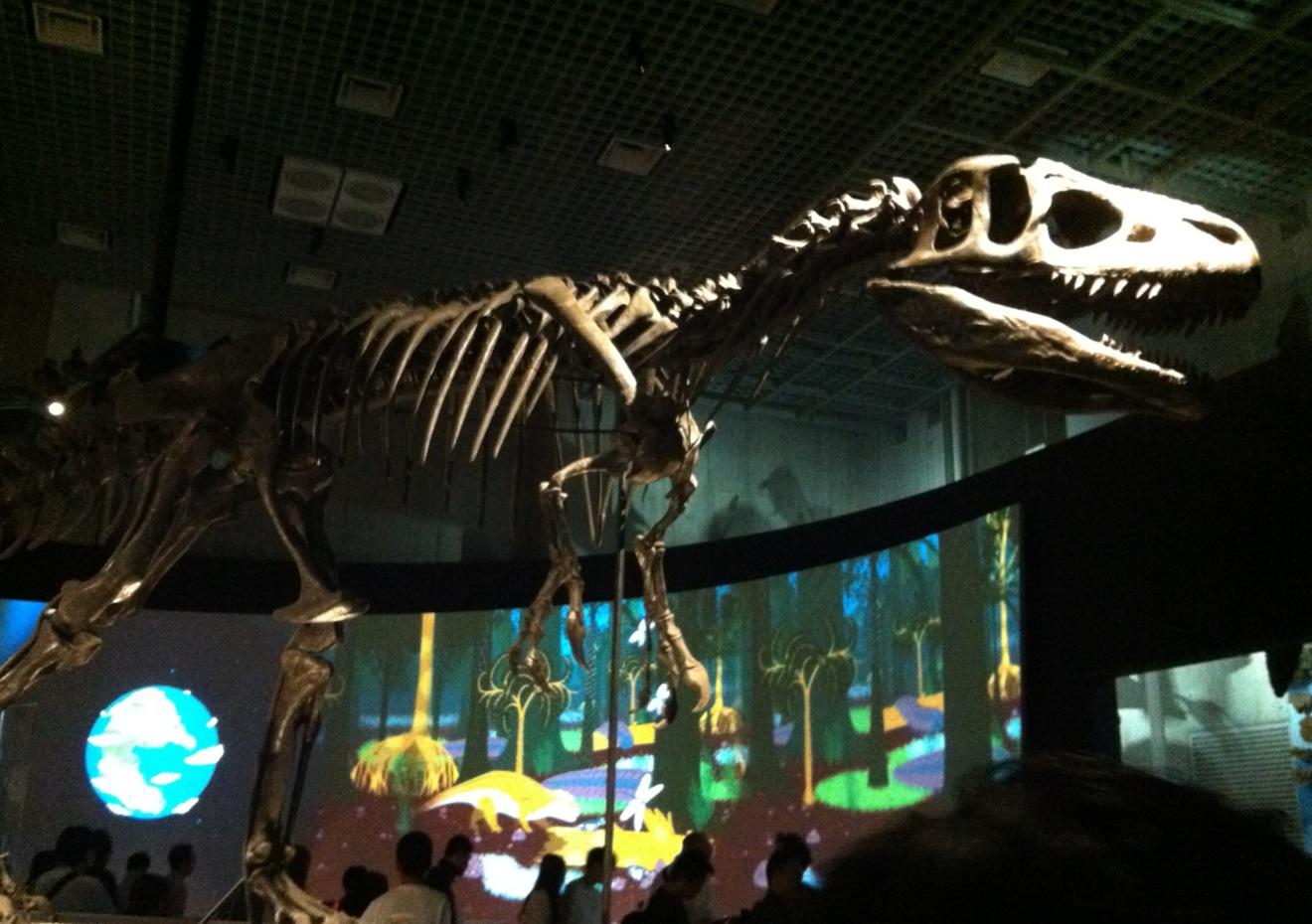 国立科学博物館の恐竜の化石