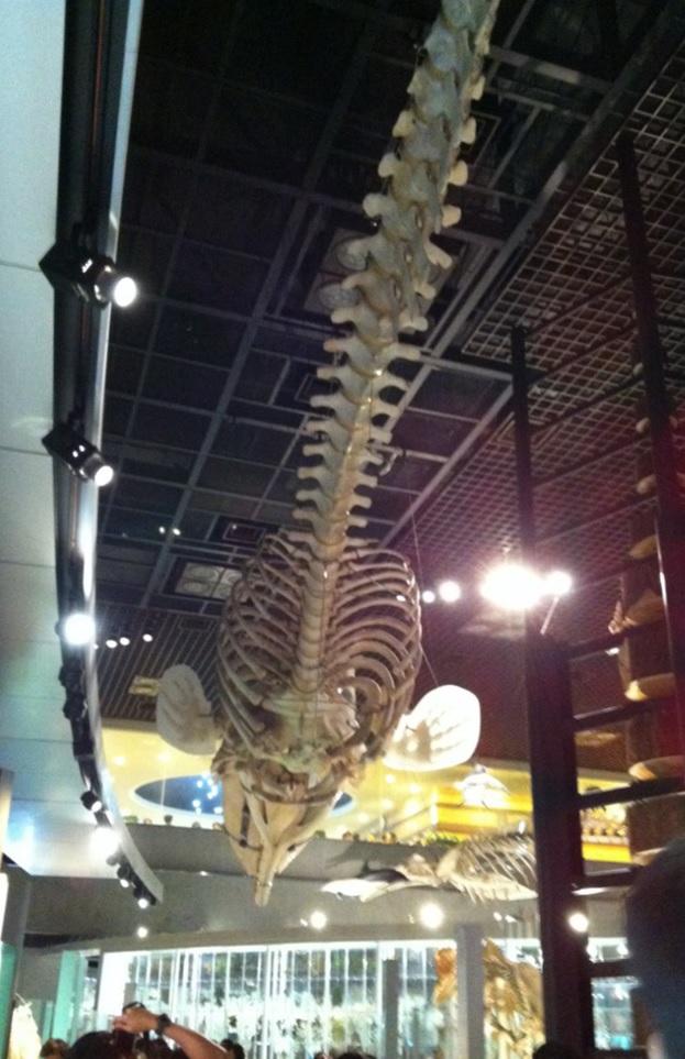 国立科学博物館の魚類の化石